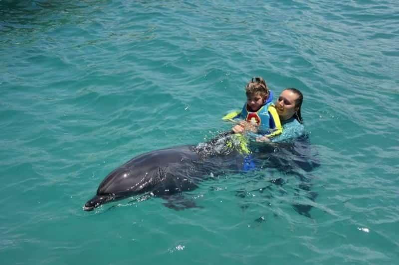 Pływanie Z Delfinami W Belek